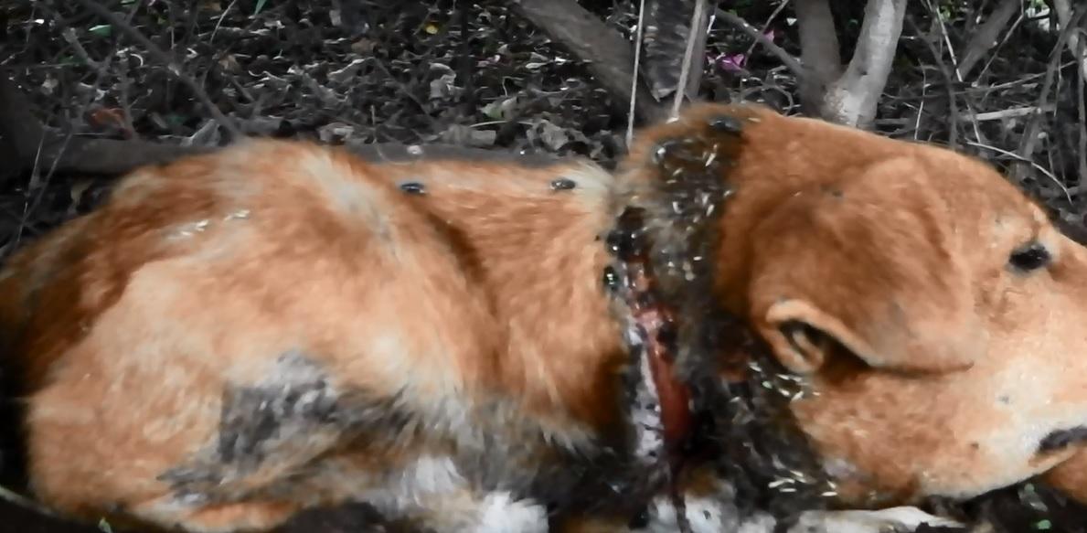 Oliver Dog Rescue